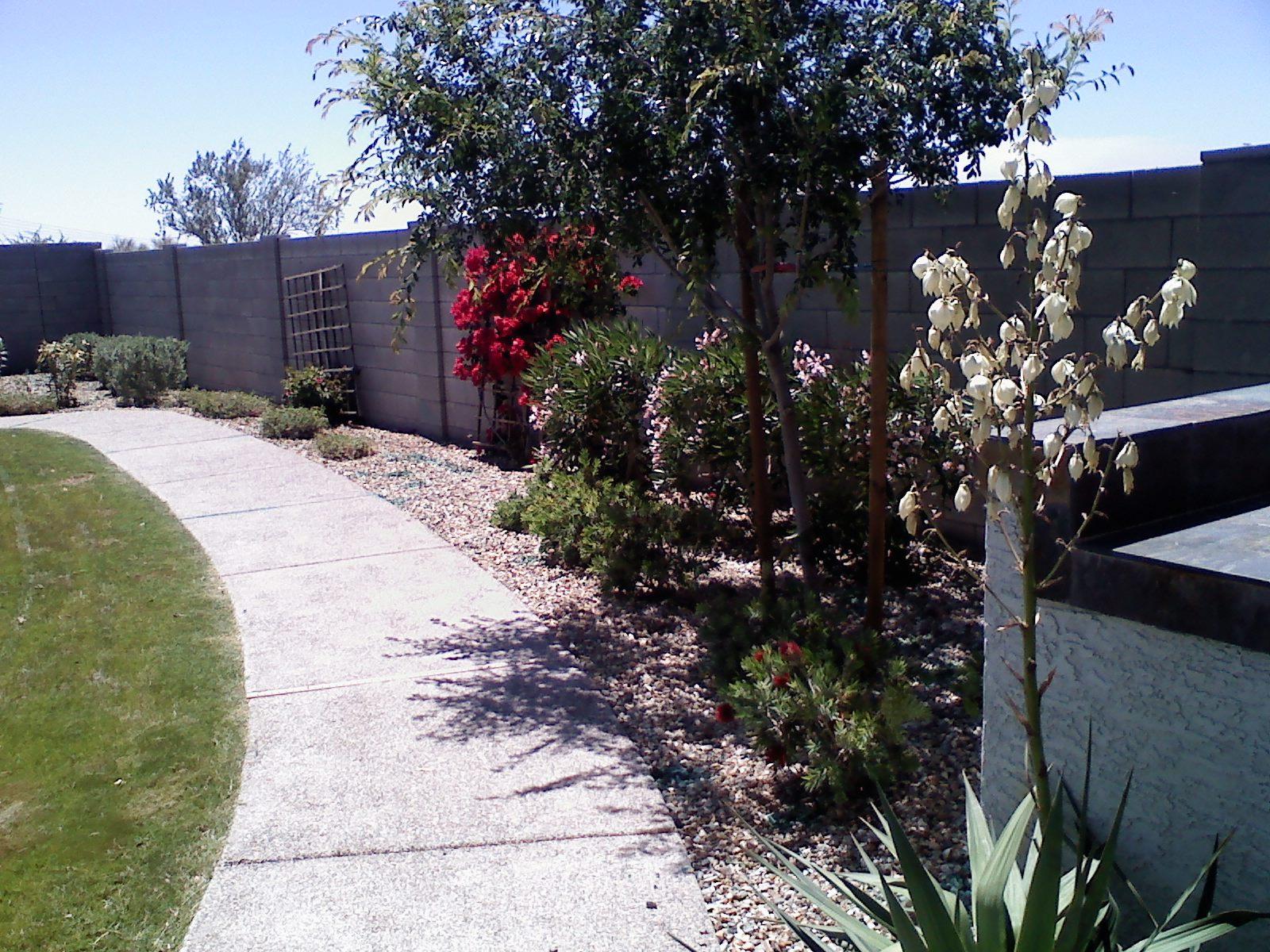 First Option Landscaping Surprise Arizona Goodyear Peoria Buckeye Az Lawn Care Tree Trimming